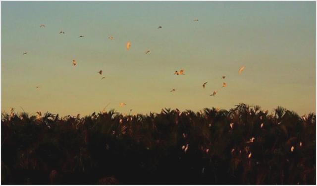 Pulau kecil di Sidoarjo yang menjadi lokasi burung migran. (Foto: Aji Wihardandi)