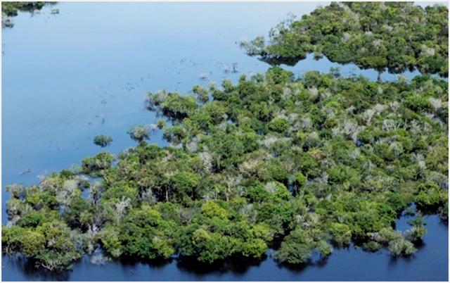 Danau Sentarum, Kalimantan Barat, sering didatangi burung migran dari berbagai belahan dunia. (Foto: Ridzki R Sigit)
