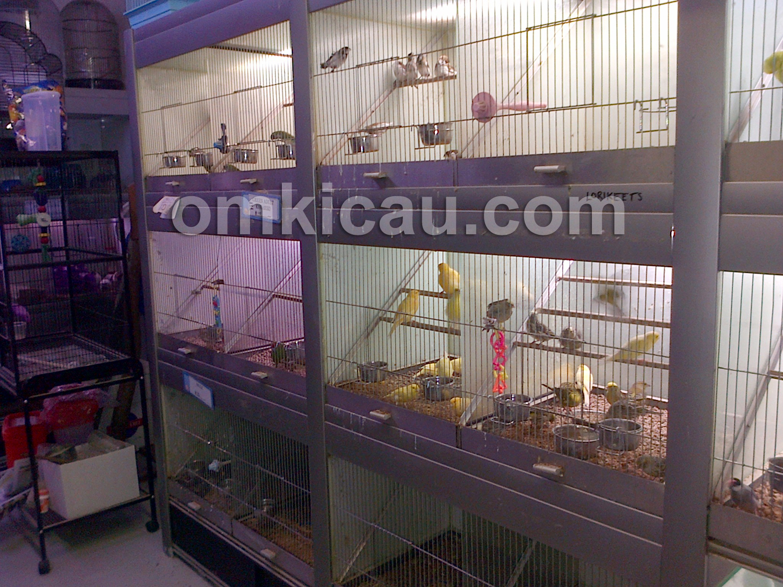 Display burung yang dijual oleh petshop di Victoria Market.
