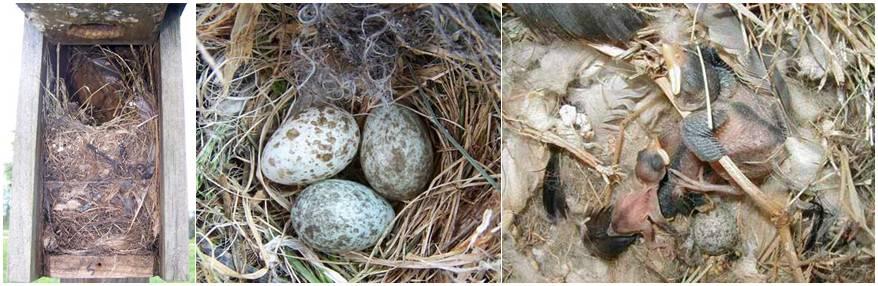 Kotak sarang yang sudah digunakan oleh burung untuk bertelur