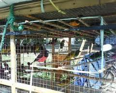 Dalam kandang aviary