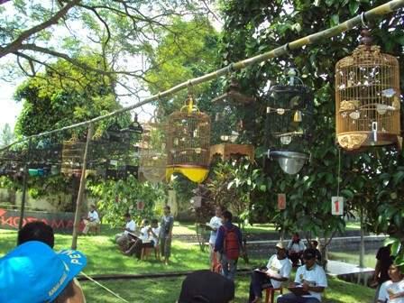 Lombap pleci/ kecial lombok yang sering di gelar di lombok dan sekitarnya