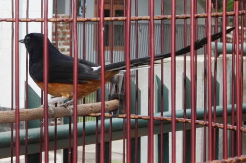 Racun selalu tenang jika melihat wajah perawatnya, Om Iqbal. (Foto: Dok M Khadafi)