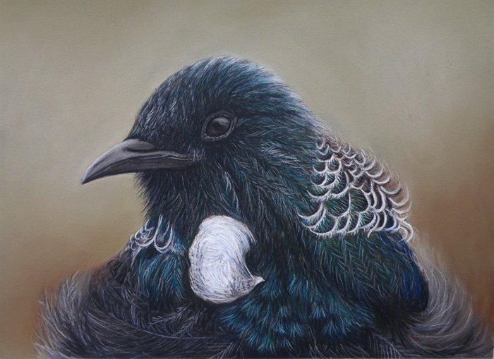 Burung tui - Parson Bird ( Prosthermadera P. novaeseelandiae )
