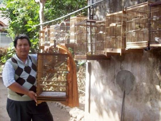 Om Ridho Arianto (Figas Bird Farm Jogja)