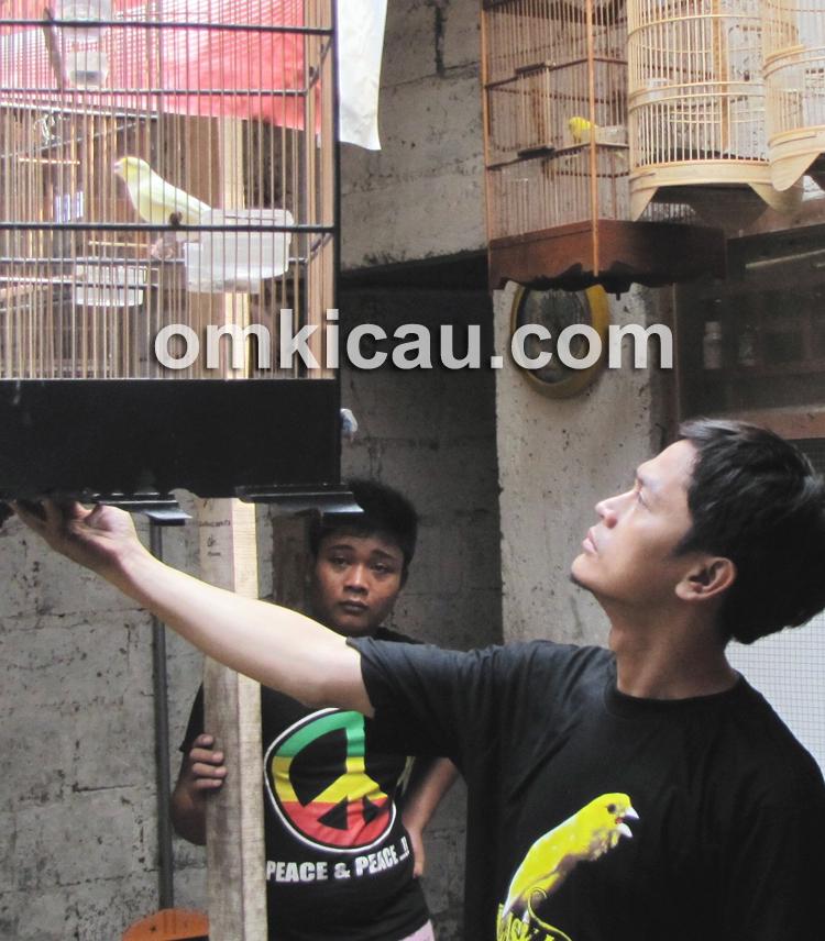 Tips membeli burung di pasar burung
