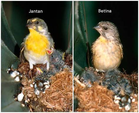 Perbedaan antara burung jantan dengan burung betina