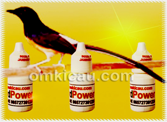 ATP dan Bird Power