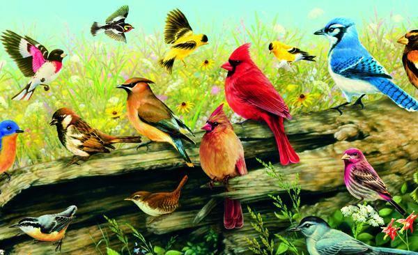 Semakin banyak spesies burung dihalaman tersebut , semakin tinggi pula harga propertinya