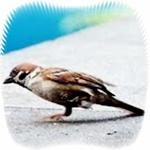 feat-burung-lumpuh