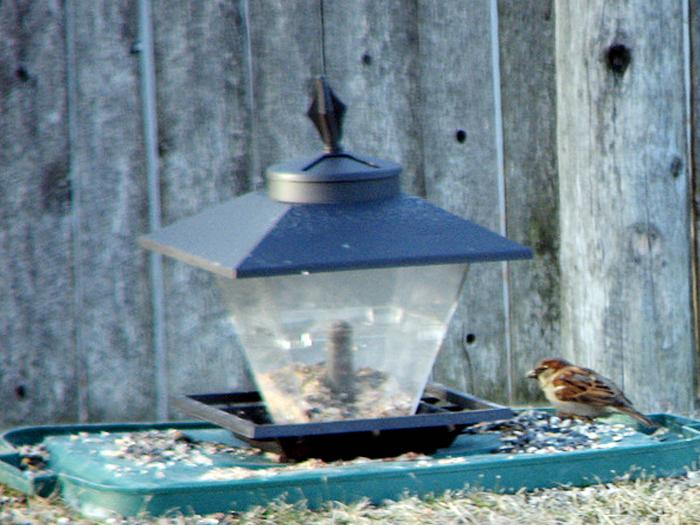 Burung di halaman rumah