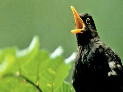 kicauan burung di pagi hari
