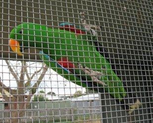 Termasuk burung yang dilindungi