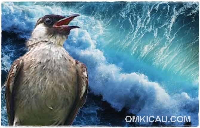 Kemampuan burung mendeteksi bencana