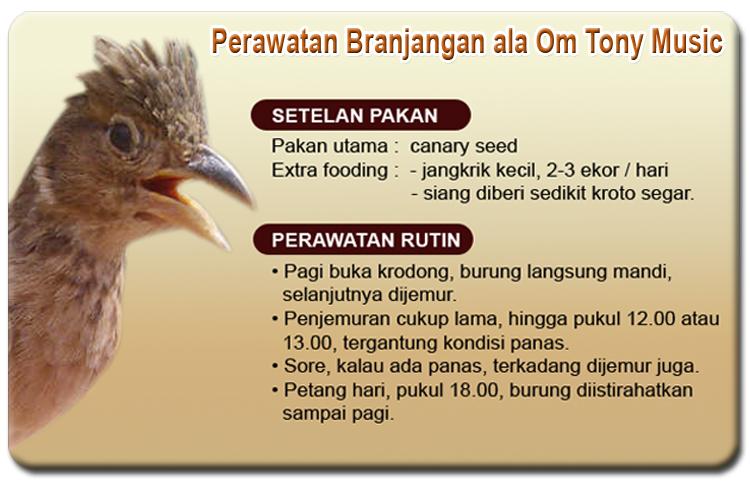 perawatan burung branjangan