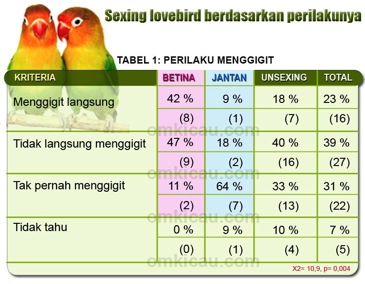 Beda Jantan Betina Lovebird Berdasarkan Perbedaan Perilaku Om Kicau