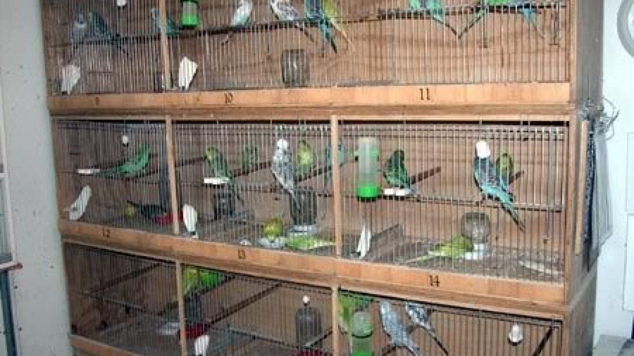 Cara Membuat Sangkar Burung Susun Mudah Dan Praktis