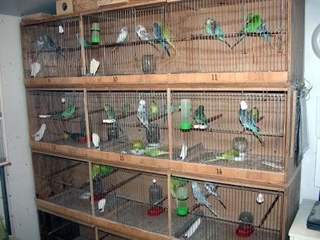 Cara membuat sangkar burung susun