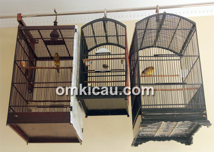 Tips pemasteran burung