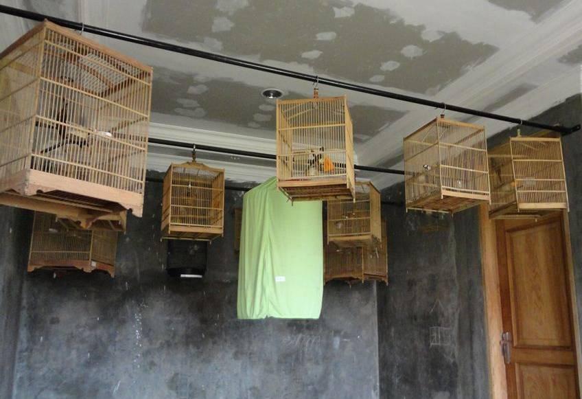 Memaster burung dalam ruangan