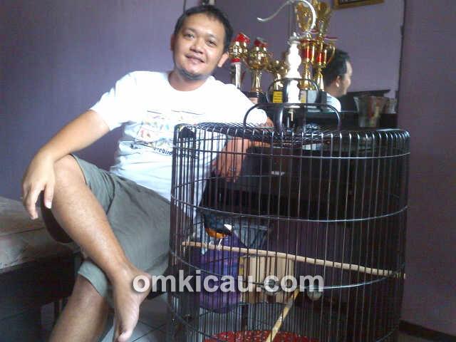 Indra Jr KM dan murai batu Playboy