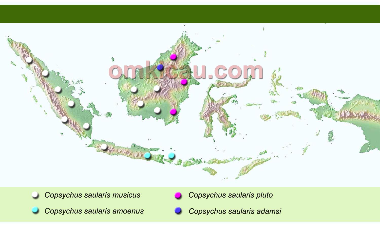 peta burung kacer di Indonesia
