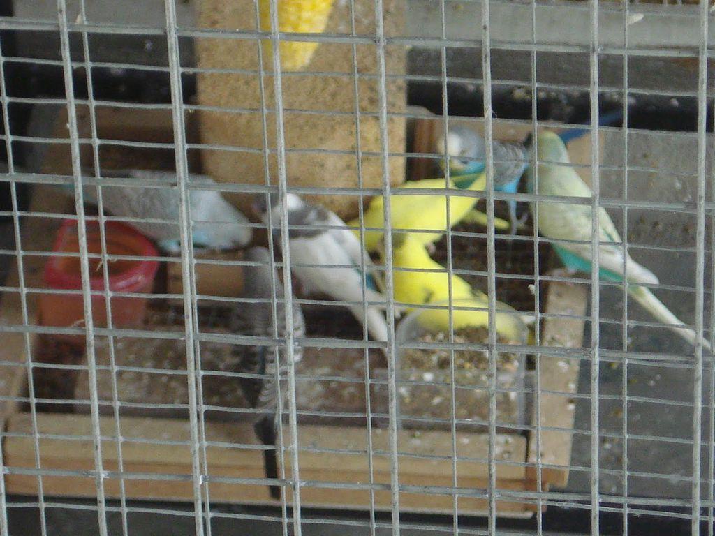 Burung yang menyantap makanannya ( gambar: kelisa_RTG   MBF )