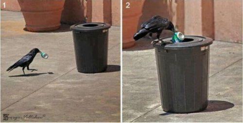 Gagak yang memasukan sampah pada tempatnya
