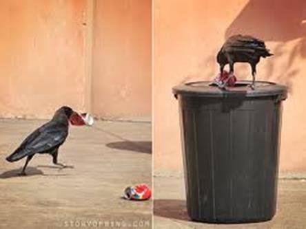 Gagak yang mengumpulkan sampah