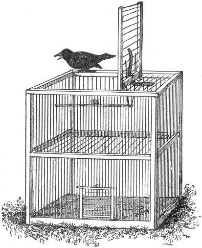 Menangkap Burung Lepas Menggunakan Getah