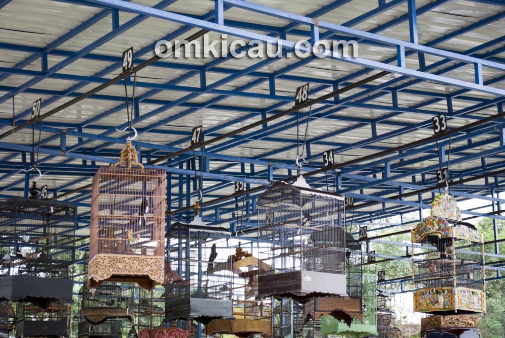 Arena Lomba Burung Polder Air Hitam Samarinda