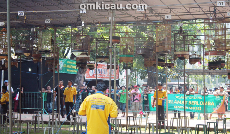 Lomba Burung Royal Cup 2013