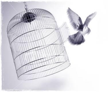 burung kabur