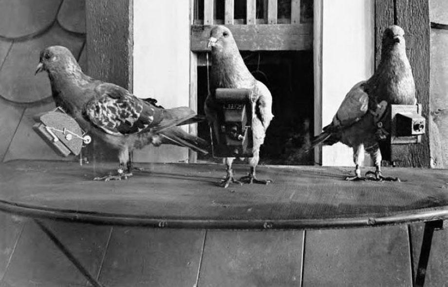 Burung merpati yang dilengkapi kamera untuk tujuan pengintaian pada perang dunia I dan II