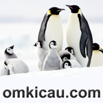feat penguin kaisar