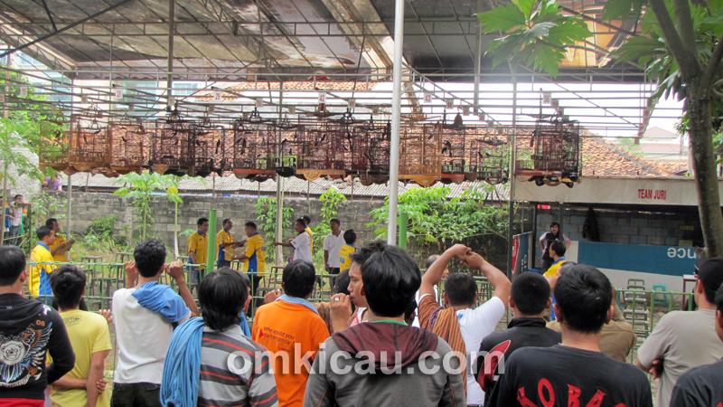 Kelas murai batu - Taman Radja Jakarta