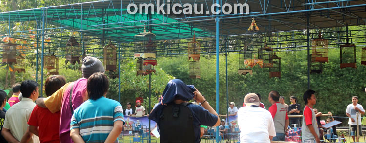 One Stop Pleci Festival - Jogja