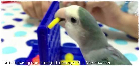 Melatih burung denan berbagai trik