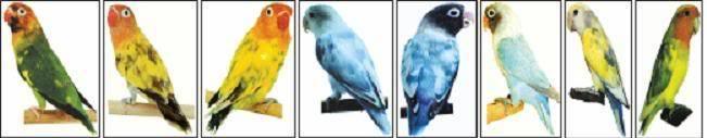 Warna warni pada pangkal sayapr