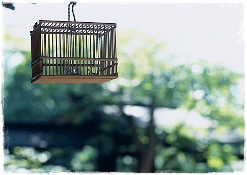 Ilustrasi : menunggu burung yang lepas kembali ke sangkarnya