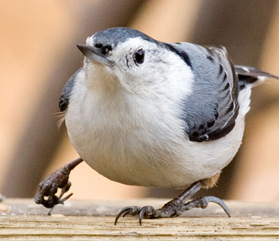 Burung yang mengalami patah kaki