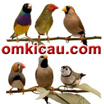 feat burung finch