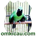 feat cucak hijau bromo