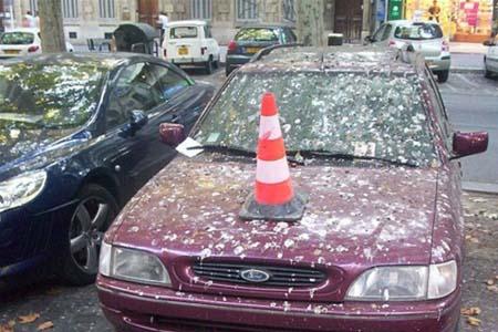 Burung ternyata lebih memilih mobil warna merah untuk membuang kotorannya