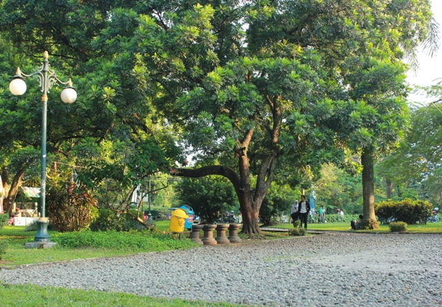 Taman kencana yang berada di tengah kota Bogor, nampak asri namun sayang sudah kehilangan beberapa jenis burung liar.