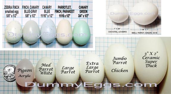 dummy telur