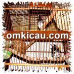feat breeding anis kembang