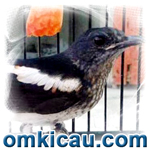feat buah untuk burung pemakan serangga