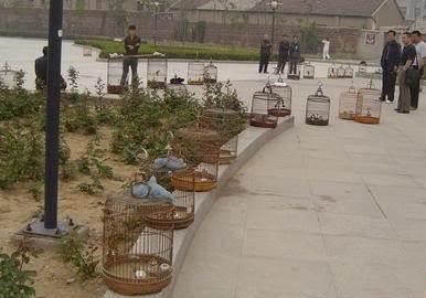Gathering atau kumpul-kumpul sesama penggemar sanma / bailing untuk melatih burungnya agar rajin berbunyi