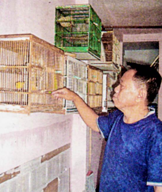 Hartono, breeder kenari asal Jombang